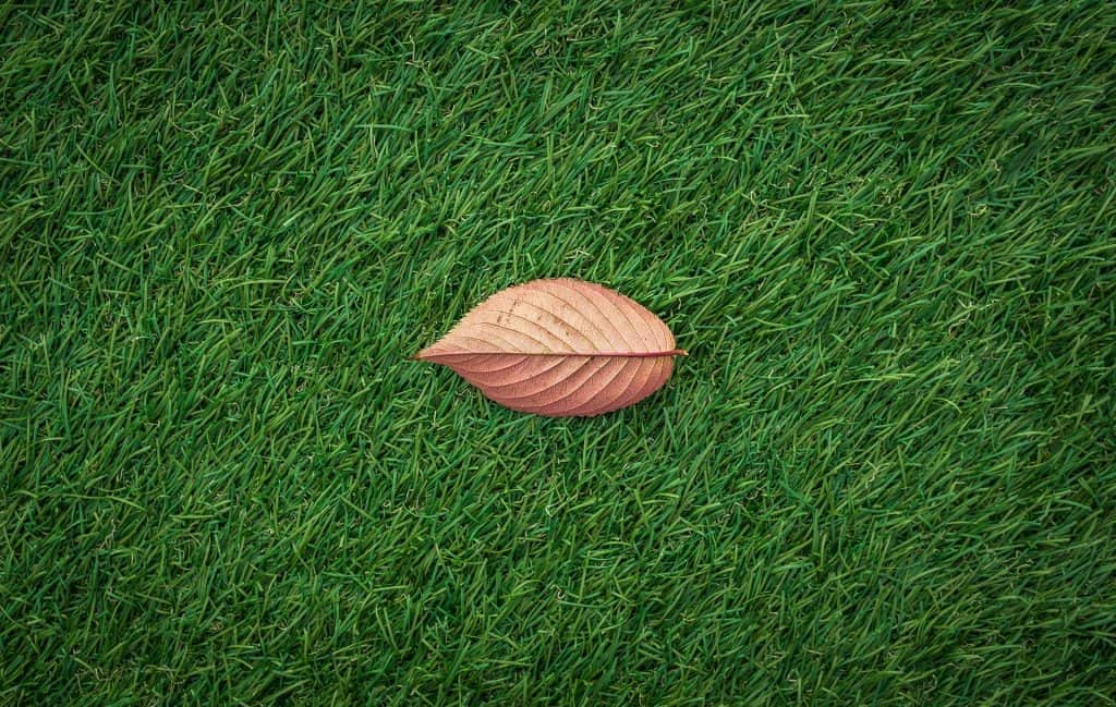 An image of a leaf on top of artificial grass.