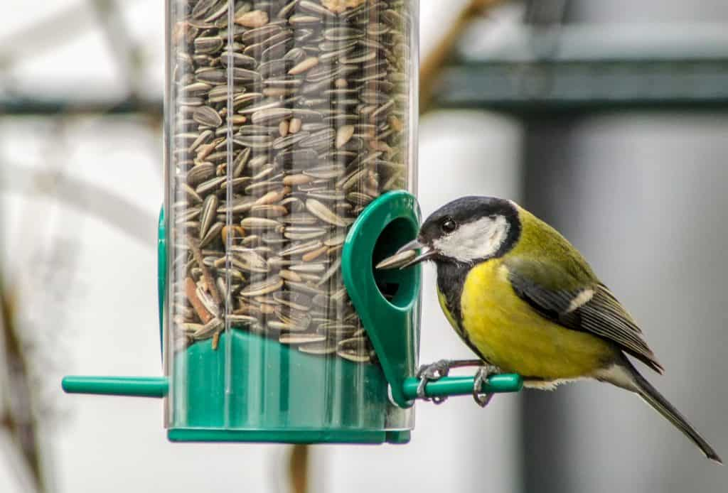 A bird next to a feeding system.